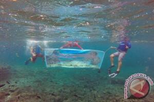 BPBL Lombok Lepas 15.000 Ekor Spat Kerang Mutiara