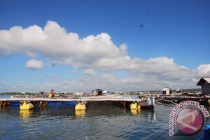 Hipikerindo Siap Serap Produksi Kerapu Nelayan Lombok