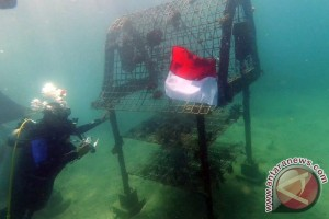 Enam Penyelam Kibarkan Bendera di Perairan Laut Sekotong