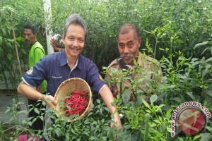 BI NTB Membangun Rumah Bibit Sayur Organik di Lombok Timur