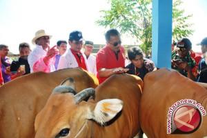 Sebanyak 1.225 ekor sapi disalurkan ke peternak