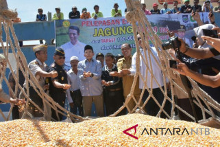 NTB Menargetkan Ekspor 30.000 Ton Jagung ke Filipina
