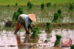 Pembangunan Pertanian di Perbatasan