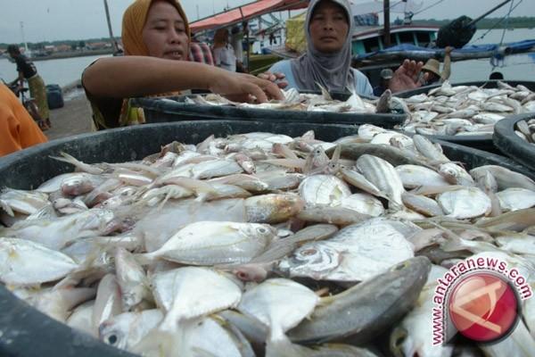 Harga Ikan Bertambah