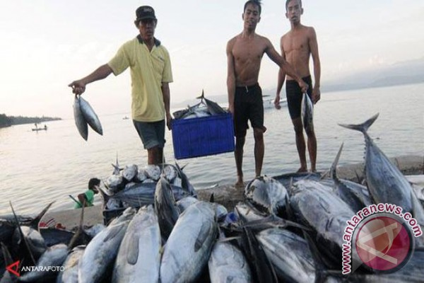 Nilai Ekspor Ikan Mencapai Rp163 Miliar