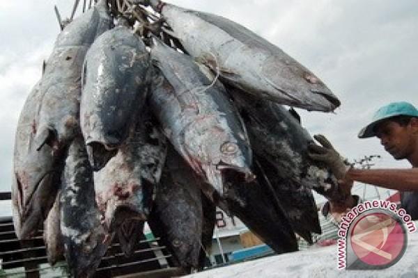 NTT Ekspor Ikan Segar ke Timor Leste