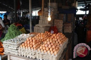 Harga Telur Ayam Masih Fluktuatif