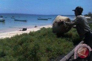 Produksi Rumput Laut Capai 630.000 Ton