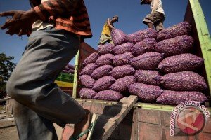 Eskpor Bawang ke Timor Leste Terkendala Harga