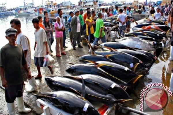 NTT Siap Ekspor Ikan ke Australia