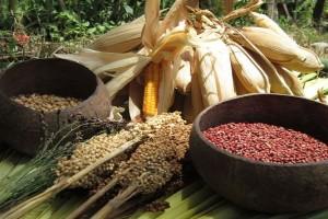 Kebutuhan pangan di Papua baru dipenuhi 52 persen