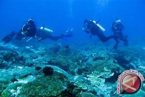 72 penyelam tanam terumbu karang di Jayapura