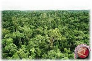 WWF: Papua kehilangan 1,42 miliar dolar akibat penebangan pohon