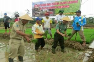 Kodim dan Dinas Pertanian Fakfak tanam padi perdana
