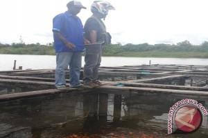 Sukses membangun ekonomi melalui budidaya ikan keramba