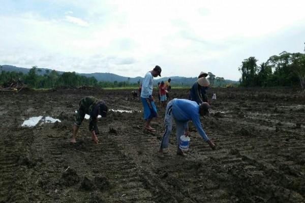 Babinsa Koramil Nimboran bantu tanam padi di Kampung Hamonggrang