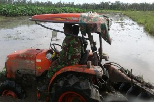 Babinsa Koramil Merauke dampingi petani membajak sawah