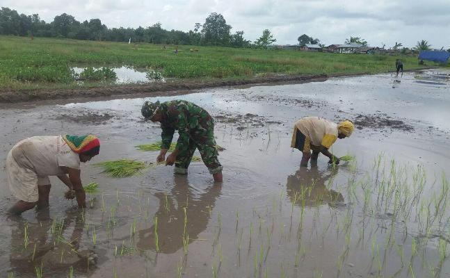 Babinsa Koramil Bade bantu petani tanam padi