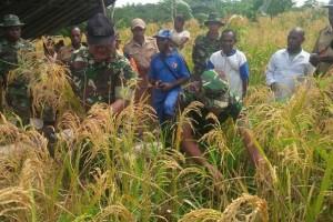 Babinsa Waropko dampingi petani panen padi