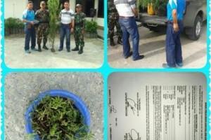 Satgas TNI Yonif Quratara Yudha serahkan ganja ke Polres Keerom