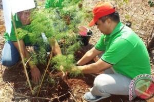 Pertamina Maluku-Papua sumbang 1.111 bibit pohon