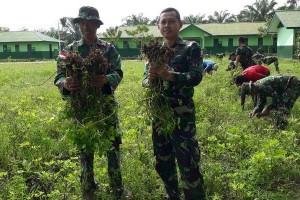 Satgas Pamtas RI-PNG dan warga Keerom panen kacang tanah