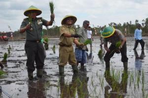 Korem 174/ATW fasilitasi penanaman padi pada lahan sawah baru