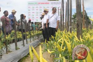Petani Timika gelar regional expo sayuran