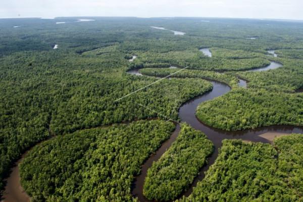 Hutan Papua di Mimika