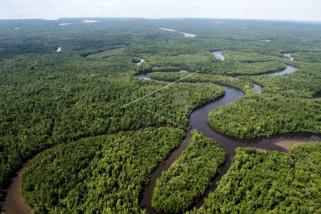 Lima kabupaten di Papua siapkan pengajuan 600.000 hektare hutan adat