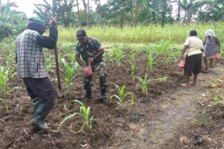 Babinsa Yapsel dampingi petani tanam jagung