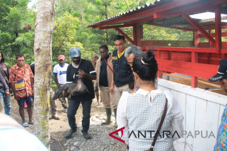 Kapolri bantu ternak babi untuk warga Papua