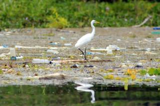 Sampah Danau Sentani