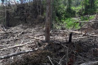 Pemkot Jayapura libatkan TNI-Polri atasi perambahan hutan