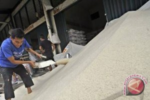 Sulteng 2016 Surplus Beras 280.000 Ton