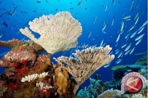 Pemkab Parimo Kembangkan Wisata Bawah Laut