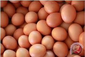 Harga telur di palu kembali normal