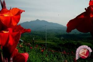 Tomohon Gelar Tournament of Flower