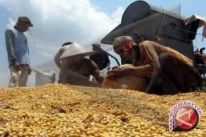 Bulog: Sulteng Belum Terima Kedelai Impor