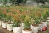 Jasa Raharja Bantu Pot Bunga Untuk Pemkot