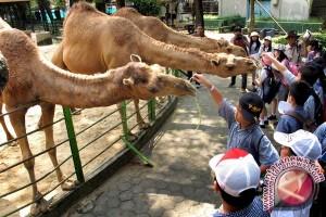 Kebun Binatang Ini Sepi Selama Ramadhan
