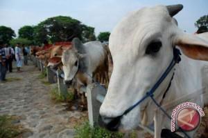Pemprov-Bulog Siapkan Operasi Pasar Daging Sapi