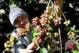 Mahasiswa Brawijaya ciptakan sel surya dari kulit kopi