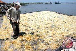 Mamuju Kembangkan Dodol Rumput Laut