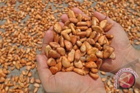 Gubernur: Sulteng Penghasil Kakao Terbesar Di KTI