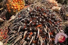 India Akui Tergantung Dengan Minyak Sawit Indonesia