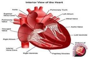 Penyakit Jantung Berkaitan Dengan Peningkatan Resiko Gangguan Mental