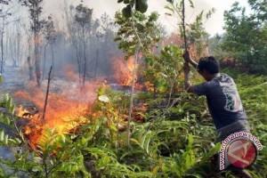 3.000 Ha Hutan Tolitoli Terbakar