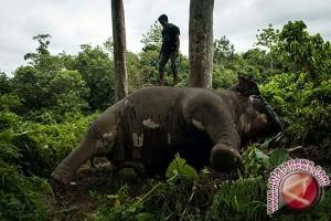 80 Gajah Zimbabwe Tewas Diracun
