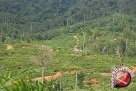 Masyarakat Sigi Belum Nikmati Hasil Menjaga Hutan